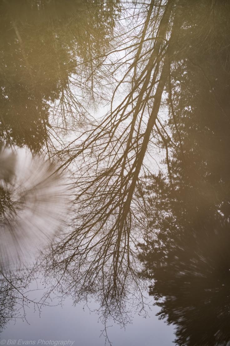 Bella Tierra DNR Park Sony RX1R +Zeiss Sonnar T* 35mm f/2 1/125s @ f/2 iso 100