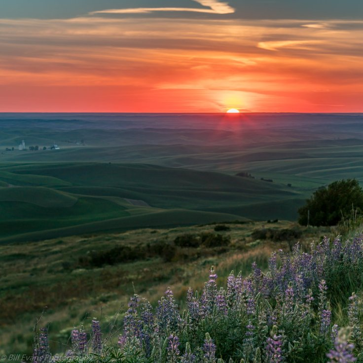 Image No. 16 - Sunset Over the Palouse ( Steptoe Butte State Park , WA)   Sony A7Rii  +  Metabones IV  +  Canon TS-E 90mm  (1/125s @ f/8 iso 100)
